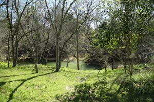 Creekside property 2